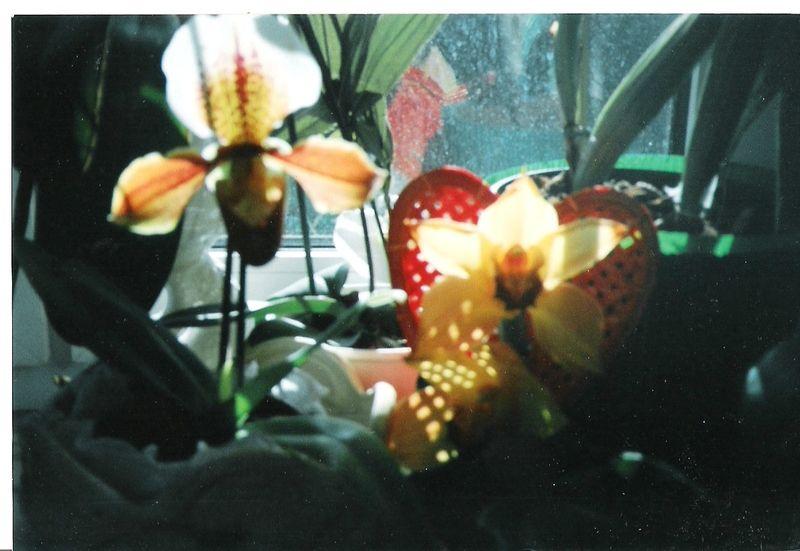 Bienvenidos al nuevo foro de apoyo a Noe #275 / 21.07.15 ~ 24.07.15 - Página 3 Orchideen-009