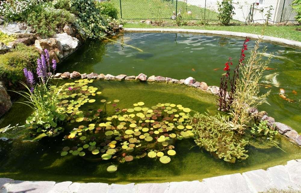 projet de paludarium extérieure de 2m de long Plantes-bassin