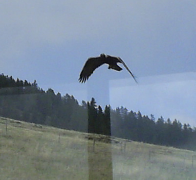 Random picture thread Eagle01