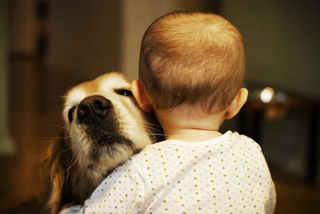 Mascotas - Página 2 8b952b3149d66f2442cdfb0882540f24tweb