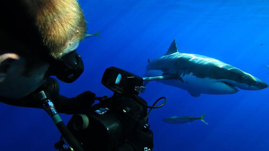 صور القرش الأبيض 31252