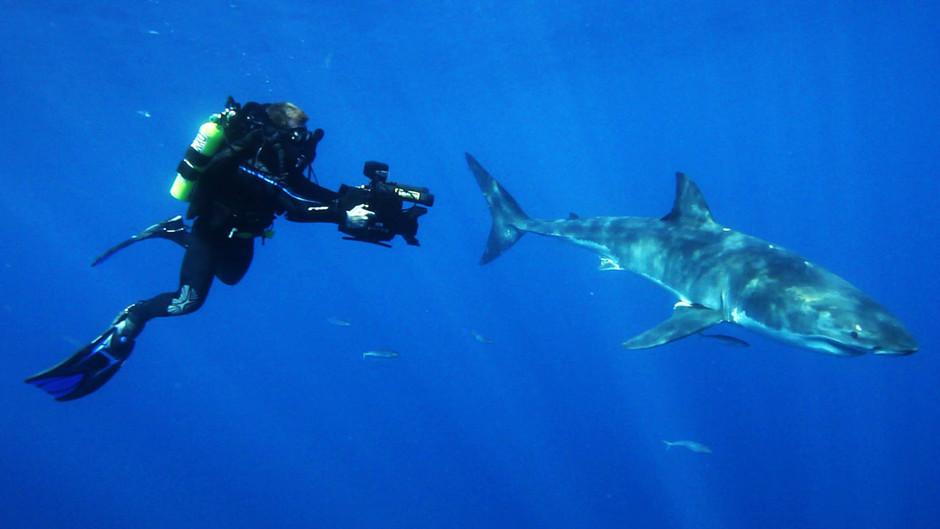 صور القرش الأبيض 31253