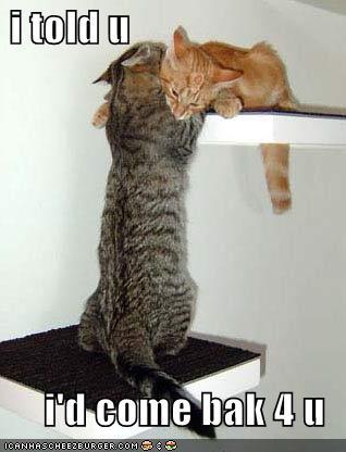 Hát như đánh đố người nghe.  - Page 2 Funny-pictures-cat-has-come-back-for-his-love