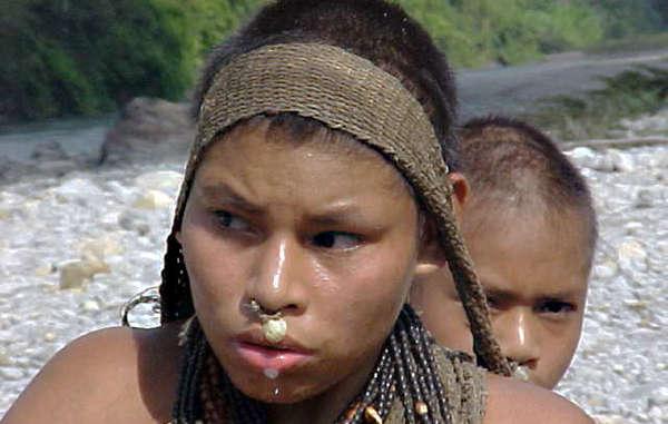 Etat d'urgence dans la forêt péruvienne Peru-nan-xx-01-medium_article_column