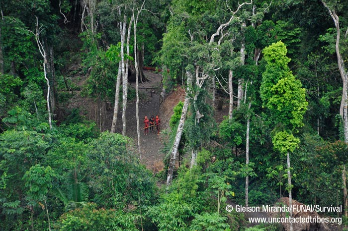 Etat d'urgence dans la forêt péruvienne 12935579_700