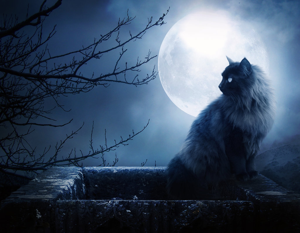 It's Lunakat's birthday too! Blue-moon-cat