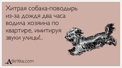 ВОСТОЧНО-ЕВРОПЕЙСКАЯ ОВЧАРКА ВЕОЛАР ЕРУТА - Страница 2 Atkritka_1375093270_356