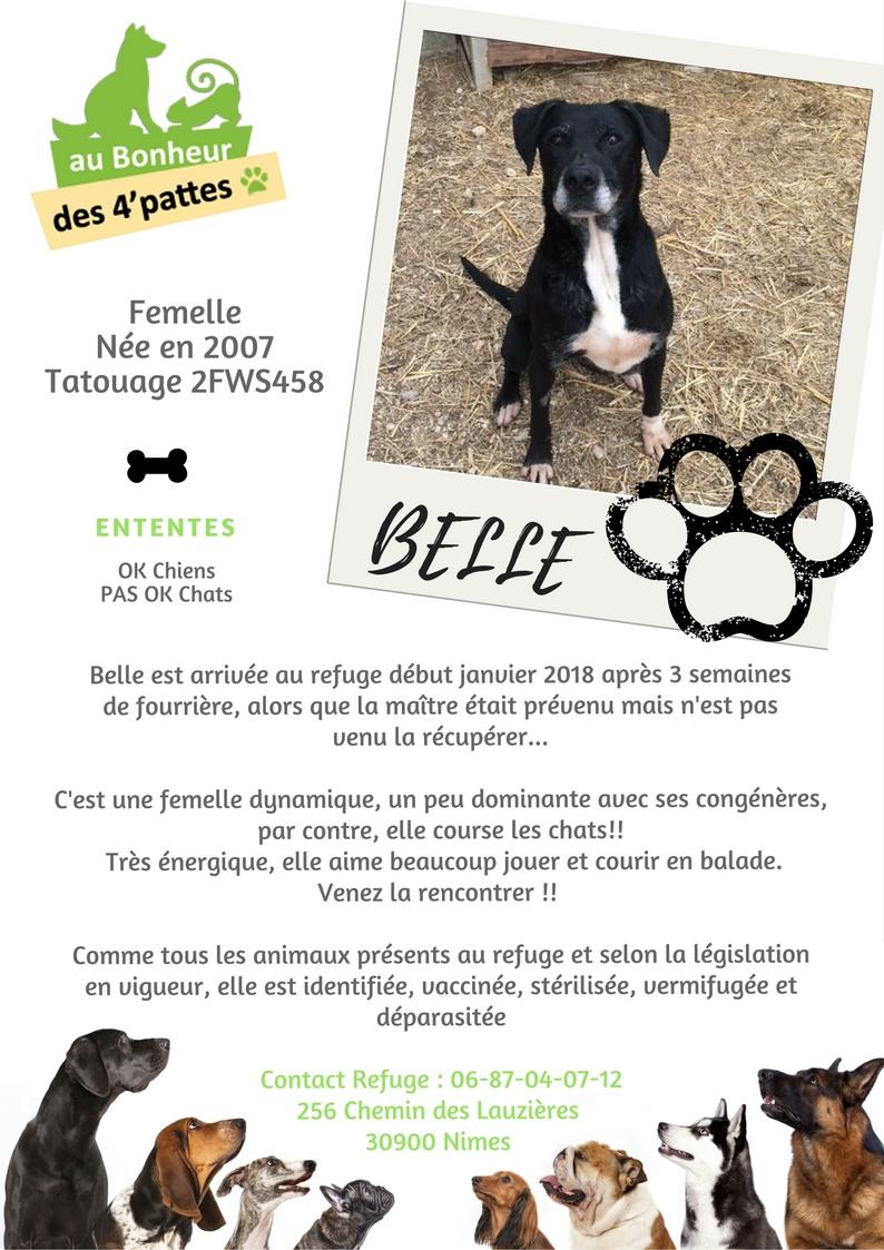 BELLE -    13 ans - Refuge au bonheur des 4 Pattes à Nimes (30) BELLE-1