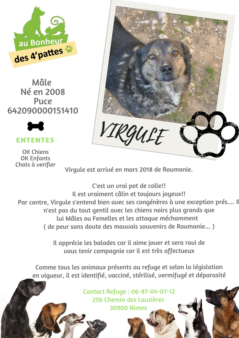 VIRGULE - 13 ans -(3 ans de refuge) Refuge au bonheur des 4 Pattes à Nimes (30) VIRGULE