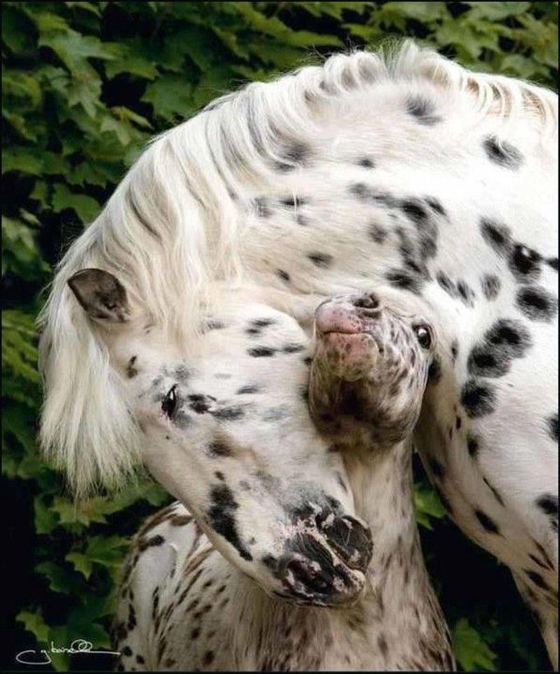 De belles images d'amitié Tendresse-cheval3