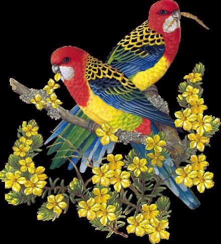Les oiseaux 1c375f55
