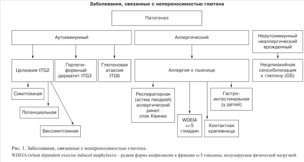 Целиакия, и другие виды непереносимости глютена Zabolevanija-svjazannye_s_neperenosimostju_gljuten