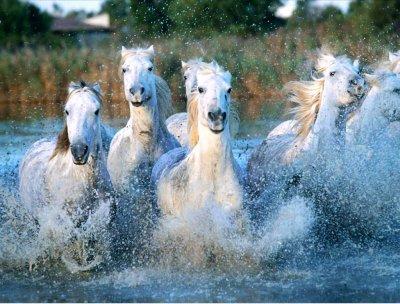 les chevaux.. - Page 4 3014699809_1_3_7imQPsfx