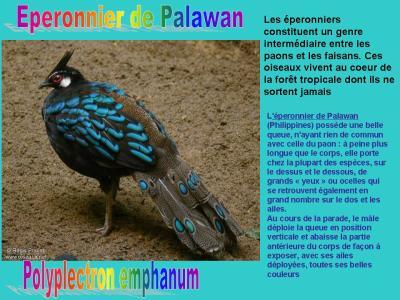 oiseau N° 1 -ajonc le 7 avril trouvé par Martine  1911237409_small_1