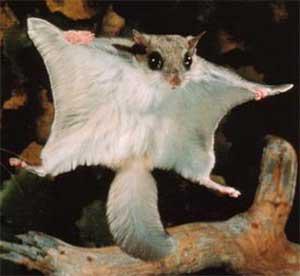 Animal de ptit loulou - 7 décembre trouvé par Lolo 3151401796_1_2_iJN2hjHq