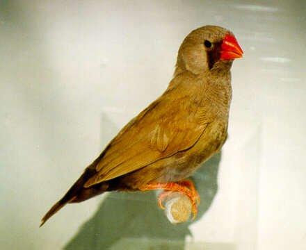 un oiseau - blucat - 30 octobre trouvé par martine 3137705020_1_8_quE6cuBH