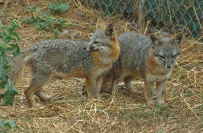 l'animal du petit loulou - 31 octobre trouvé par ginto et martin 2218460743_small_1