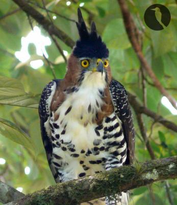 oiseau de ptit loulou le 14décembre trouvé par Martine  - Page 2 1325845570_small