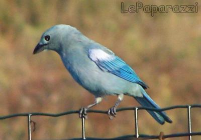 oiseau n° 2 - ajonc - 7 avril trouvé par Martine 587409069_small