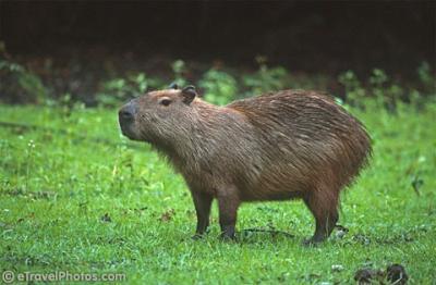 l'animal du petit loulou - 31 octobre trouvé par ginto et martin 458144460_small
