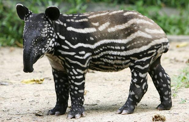 un animal -Ajonc - le 28 septembre trouvé par Suri 3049789821_2_27_b5FeAxiF
