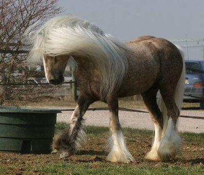 les chevaux.. 2924409227_1_3