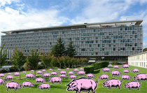Un point de vue sur la grippe porcine. Pigs_who_thumb