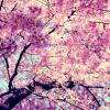 Веснушка