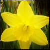 Аватары с цветами - Страница 6 Flowers3