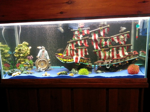 Mon aquarium de 54 litres The-pirate-aquarium-theme