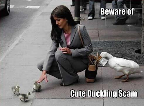 Igast pilte. - Page 2 Cute-duckling-scam