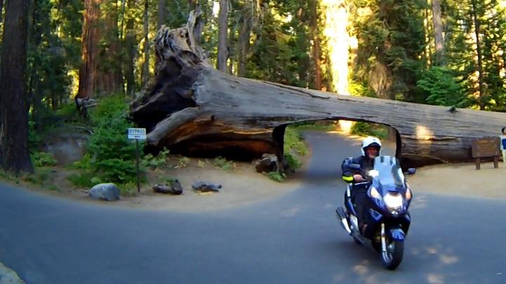 Driving Through A Sequoia