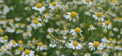 Лечебные травы 4cdbb065748d