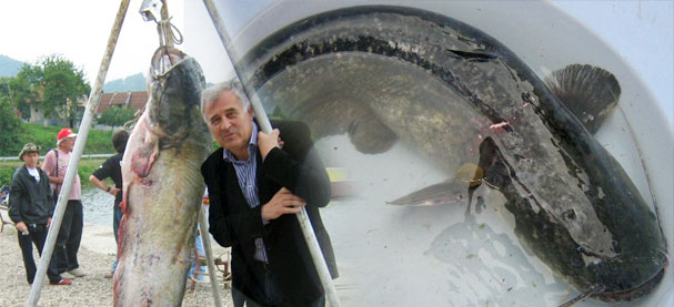 Srpski turizam - Banje - Page 3 Somovijada-u-banji-koviljaci