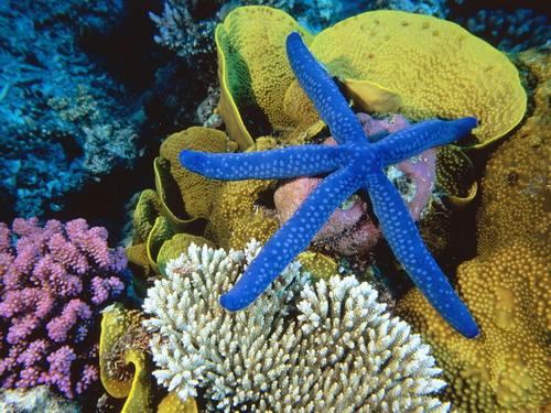 Подводный мир(Фото) 09