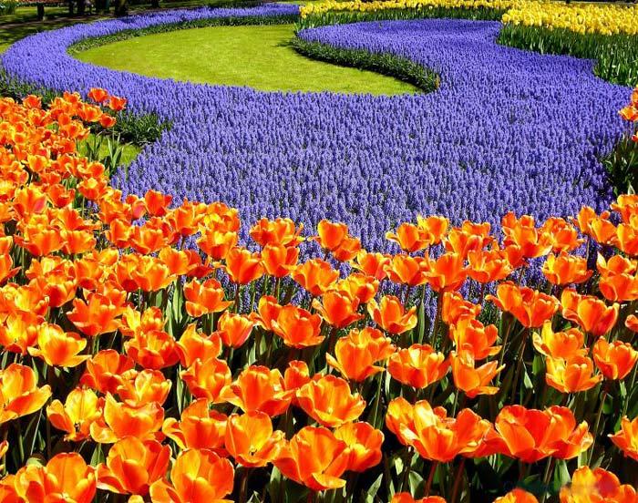 Cvetna oaza Ocean-flowers