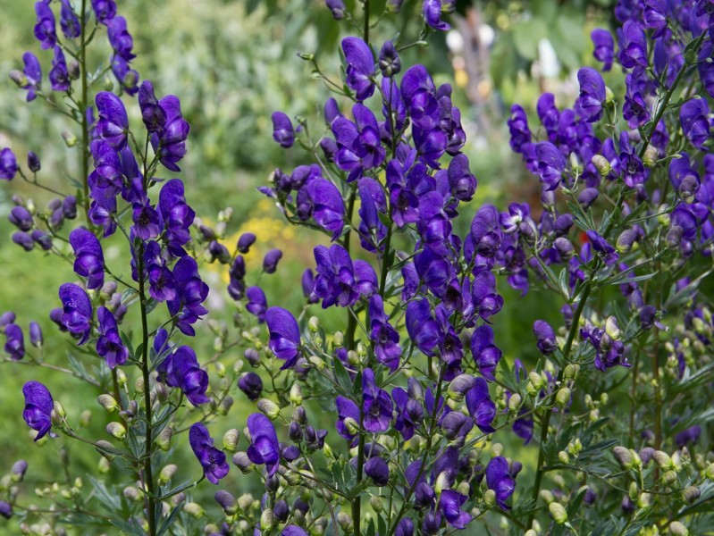 Магия растений (подробное описание магических свойств) IMG_8219