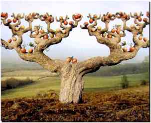 pour changer .........proverbes sur l'arbre???????? Charge