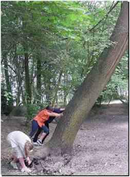 pour changer .........proverbes sur l'arbre???????? Pouss1