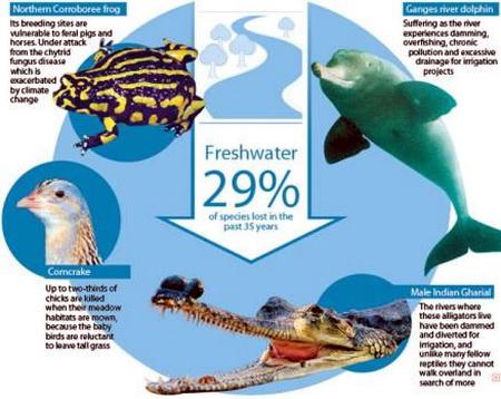 Biodiversité animale The_Living_Planet_Index