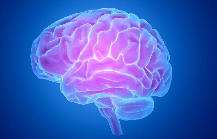 Human Brain Found to Operate in 11 Dimensions Brain-003-700x450