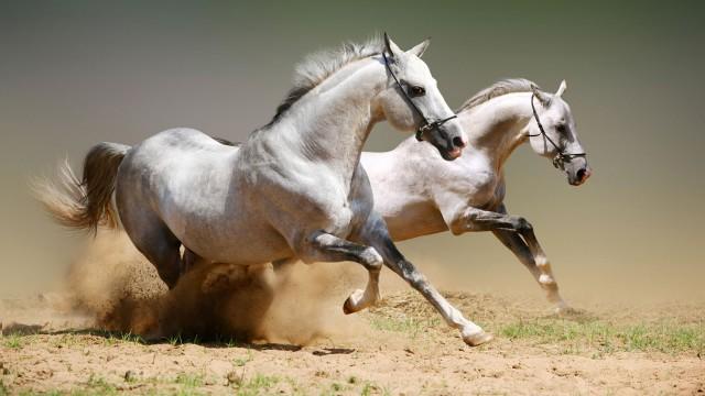 Mrzim te Horse-hd-photo-desktop-wallpapers-18246_thumb
