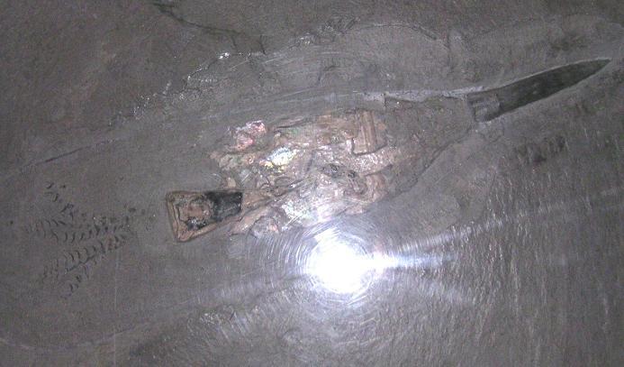 صور لبعض المستحثات Belemniten-fossil