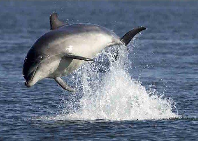 Les dauphins et les orques Bfwpsa2o