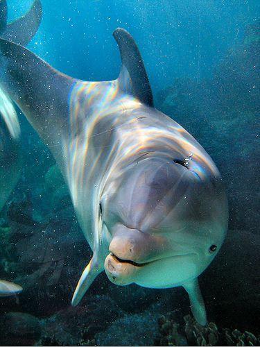 Les dauphins et les orques Jek65alg