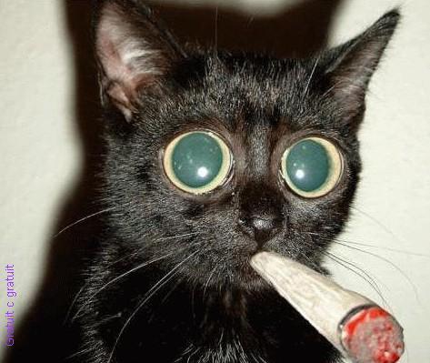 Do you like my kitty? Nes11ikg