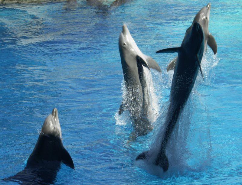Les dauphins et les orques R8le71ol