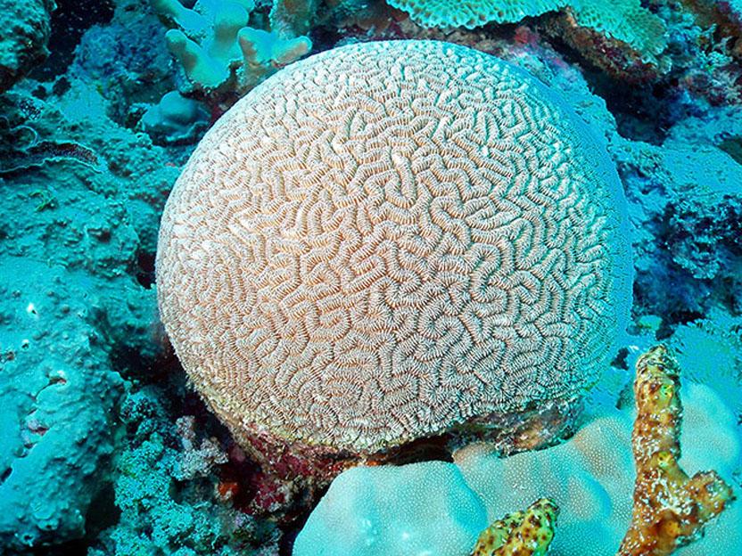 2207 Кораллы, нуждающиеся в защите