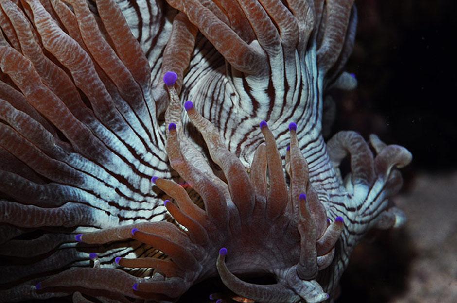 3179 Кораллы, нуждающиеся в защите