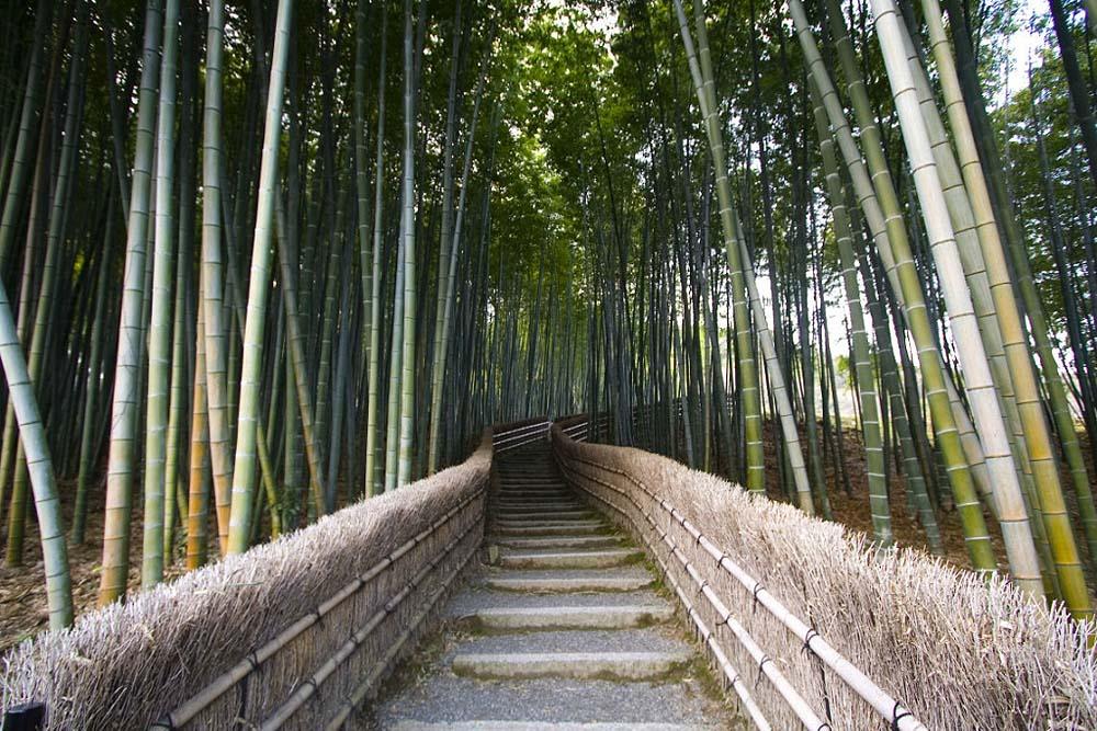 Бамбуковый коридор у подножья горы в Киото 590